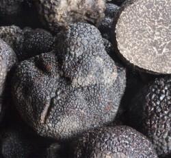 Truffes-noire-perigord